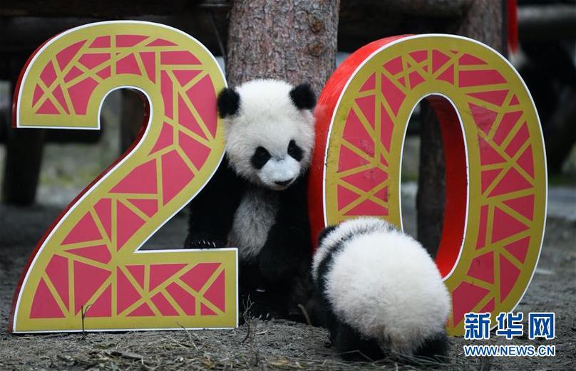 (社会)(5)大熊猫宝宝贺新春